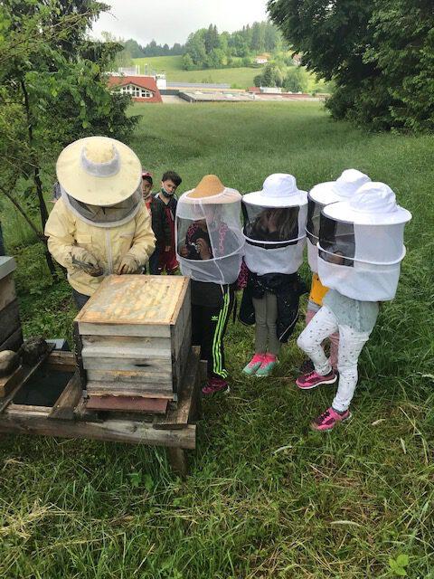 Bienenprojekt mit der Ganztagsklasse 1GT